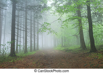 Foggy Forest Path under green trees