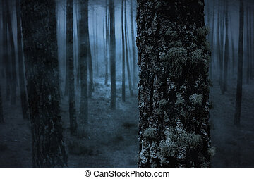 Pine in a spooky foggy forest