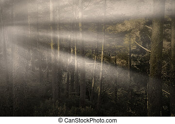 Foggy forest with sunbeams