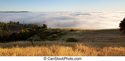 Foggy hillside panorama - Blanket of fog covers golden ...