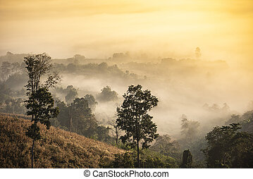 foggy landscape forest in the morning beautiful sunrise mist cover mountain background at countryside winter.
