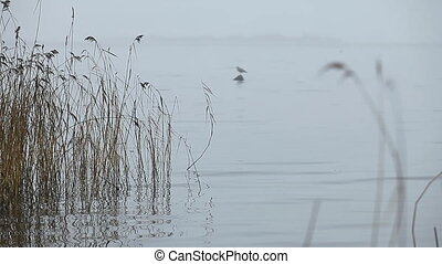 foggy autumn landscape, white lake, silhouette of a lonely bird on the horizon