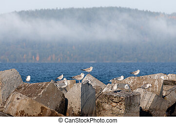 foggy landscape with seagulls sitting on stones