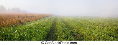 Foggy meadow at morning