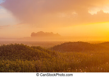 Foggy meadow at sunset