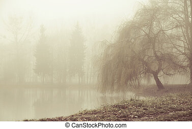 Foggy moring in peaceful place