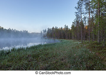 Foggy morning at forest pond