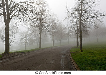 Foggy Morning at the Park Winding Path