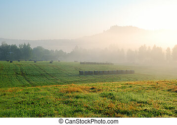 Foggy morning grassland landscape with trees and hill in the dis