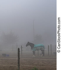 Foggy Morning Horse