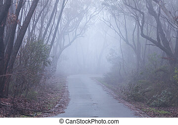 Foggy morning in the Blue Mountains