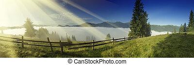 Foggy morning landscape