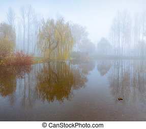 Foggy morning landscape in the autumn park near the lake