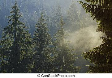 Foggy morning landscape - Foggy morning summer landscape...