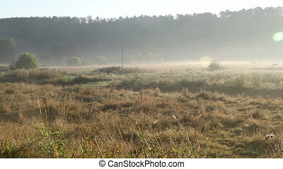 Meadow - foggy morning. Meadow