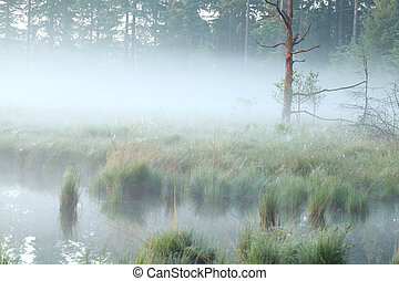 foggy morning on swamp