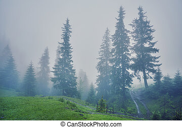 Foggy morning summer landscape with fir trees