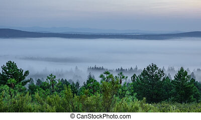 Foggy morning, time-lapse - Time lapse over the pine trees...