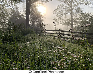 Foggy Morning with Wildflowers
