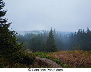 Foggy mountain landscape with coniferous forest on the hills reaching the clouds in a cold foggy spring morning.