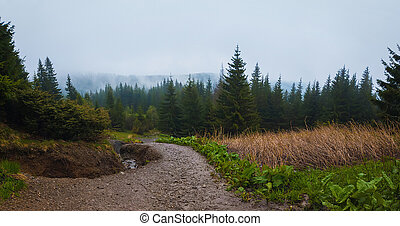 Serene scenery of spring Carpathians with a hiking track through the woods.