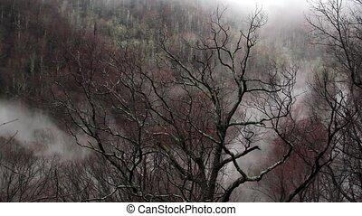 Foggy Mountain Loop