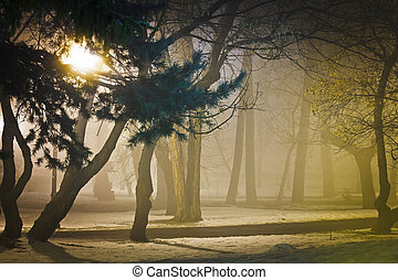 Foggy night in park - Foggy night in the park, wintertime