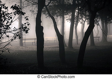 Foggy park alley with benches and trees silhoettes on night