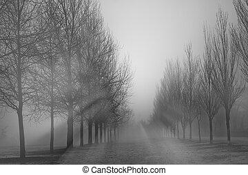 Foggy park in winter