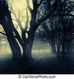 Foggy park path