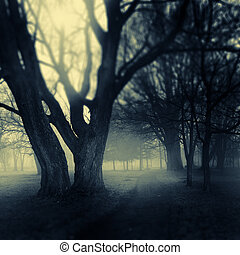Foggy park path - Foggy darkened path leading through the...