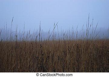 Foggy Prairie