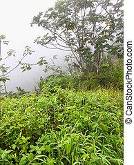 Foggy Puerto Rico Rainforest