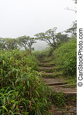 Foggy rainforest of the Mount Pelee volcano, Martinique, Caribbean