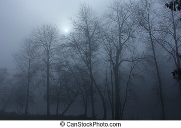 a cold Jan. morning with fog on the Rogue River Oregon