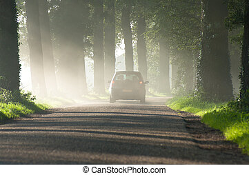 foggy road - car disappearing in the morning mist
