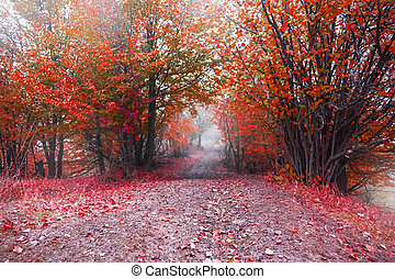 Foggy road in the red autumn forest