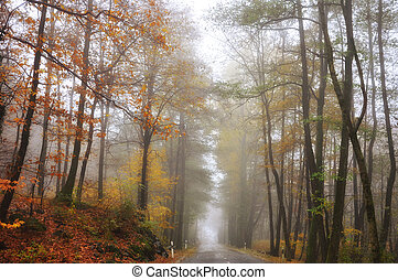 Foggy road with a autumn trees and leaves
