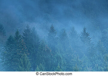 foggy spruce forest in mountains