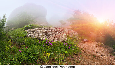 Foggy summer landscape in the mountains. Sunrise