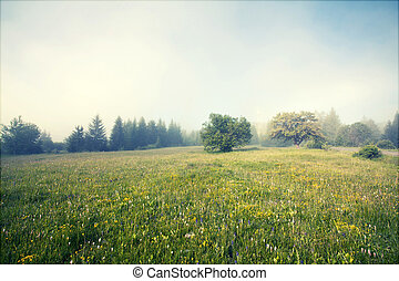 Foggy summer morning in the mountain