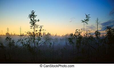 Foggy summer night in Vasterbotten, northern Sweden