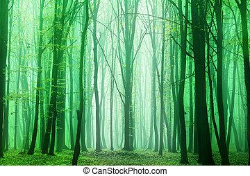 Fantasy forest.