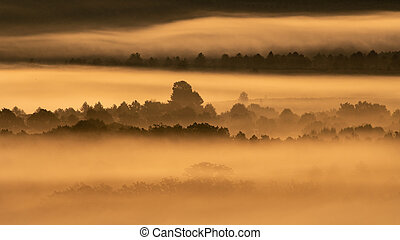Foggy sunrise in the country with trees