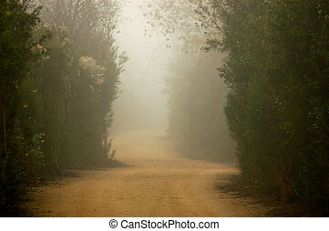 Foggy Trail - A Foggy dirt trail through nature preserve