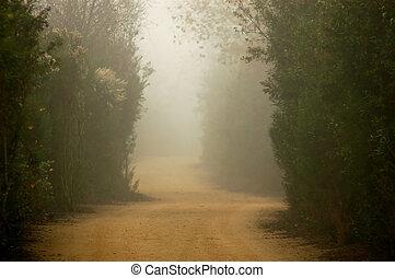 A Foggy dirt trail through nature preserve