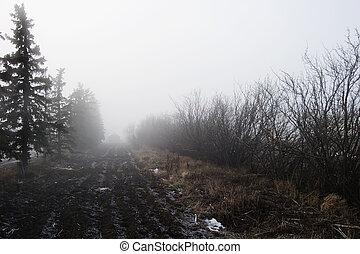 Foggy Tree Row