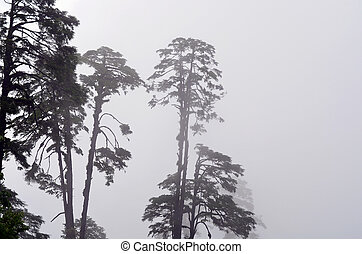 Foggy Trees in Bhutan
