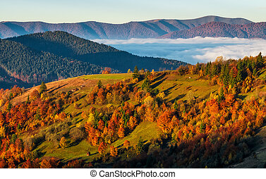 foggy valley behind the hill at autumn sunrise. colorful...