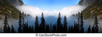 Foggy Valley Mist Misty with Pine Trees Forest in the Wilderness